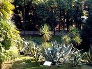 Parco Arciducale Arboreto
