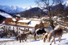 Abenteuer am Pferde- und Schafhof Klinser