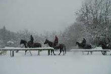 Pferdeschlittenfahrten/Winterreiten