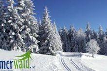 Böhmerwald-NordischesZentrum: Einstieg Grünwald
