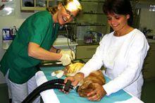 Kleintierpraxis Dr. med.vet. Michaela Wulschnig